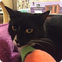 Adopt A Pet :: Pip - Monroe, GA