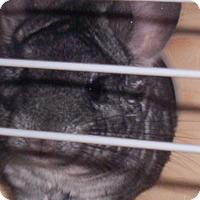 Adopt A Pet :: Doris - Avondale, LA
