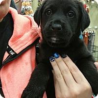 Adopt A Pet :: Tiny Tim - Ogden, UT