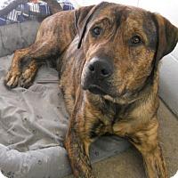 Adopt A Pet :: Paco - Siren, WI