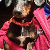 Adopt A Pet :: Brando - Decatur, GA