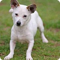 Adopt A Pet :: ROXI - Tallahassee, FL