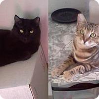 Adopt A Pet :: Black Bart & Precious - San Andreas, CA