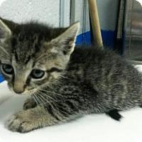 Adopt A Pet :: LUIGI - Brooklyn, NY