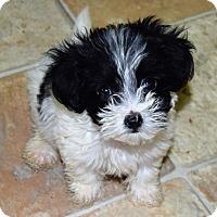 Adopt A Pet :: Dottie - Hazard, KY