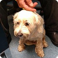 Adopt A Pet :: Fiona - Manassas, VA
