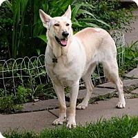 Adopt A Pet :: Bonnie (IL) - Hooksett, NH