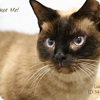 Adopt A Pet :: Lucy - Camden, DE