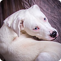 Adopt A Pet :: HOSS - Anna, IL