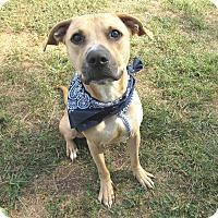 Adopt A Pet :: Skip - Lexington, NC