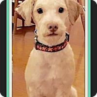 Adopt A Pet :: Jasper - Rancho Cucamonga, CA