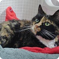 Adopt A Pet :: Pepper - Howell, MI