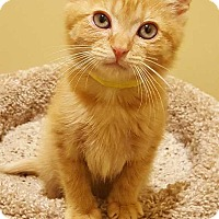 Adopt A Pet :: Marty - Accident, MD