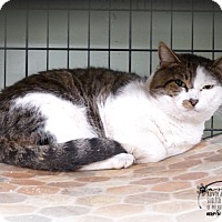 Adopt A Pet :: Dylan - Marlinton, WV