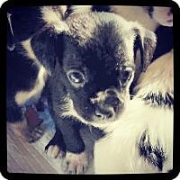Adopt A Pet :: Michelangelo - Grand Bay, AL