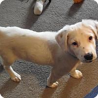 Adopt A Pet :: Lucas - DeForest, WI