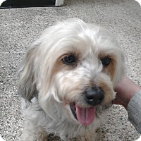 Adopt A Pet :: January - Thousand Oaks, CA