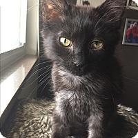 Adopt A Pet :: Franklin - Columbus, OH