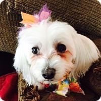 Adopt A Pet :: Baby Girl - Beavercreek, OH