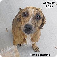Adopt A Pet :: Nellie - Lake Panasoffkee, FL