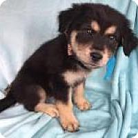 Adopt A Pet :: Racy in Texarkana, TX - Texarkana, TX