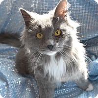 Hearts United Cat Rescue Bristol Ct