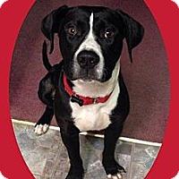 Adopt A Pet :: Saint - Snellville, GA