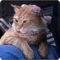 Adopt A Pet :: Garfield - Philadelphia, PA