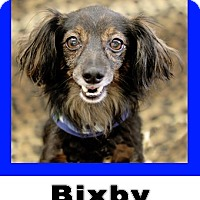 Adopt A Pet :: Bixby - Plano, TX