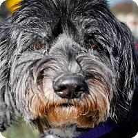 Adopt A Pet :: Tebow - Gainesville, FL