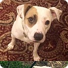 Adopt A Pet :: Bella (Apple Jacks)