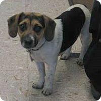Adopt A Pet :: Sunny - North Olmsted, OH