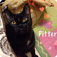 Adopt A Pet :: Pitter - Foothill Ranch, CA