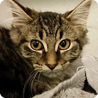 Adopt A Pet :: Ellen - Grayslake, IL