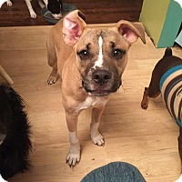 Adopt A Pet :: Chaz - Rexford, NY