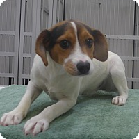 Adopt A Pet :: China - Manning, SC