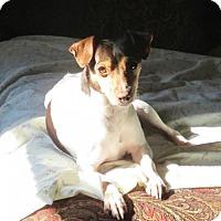 Adopt A Pet :: Rudy (VA) - Virginia Beach, VA