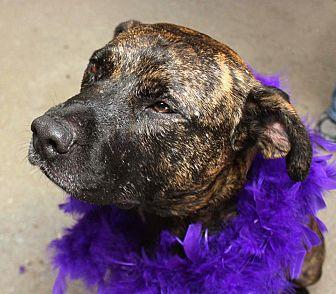 Retriever (Unknown Type)/Shepherd (Unknown Type) Mix Dog for adoption in Detroit, Michigan - Maxine