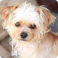 Adopt A Pet :: Raffles - Woonsocket, RI