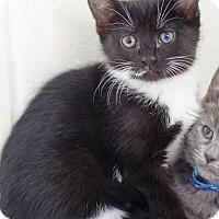 Adopt A Pet :: Junebug - Greenwood, SC