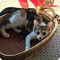 Adopt A Pet :: Bonnie - Putnam, CT