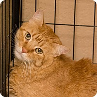 Adopt A Pet :: Bubba - Fountain Hills, AZ