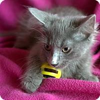 Adopt A Pet :: Flint - Staunton, VA