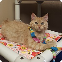 Adopt A Pet :: Geppetto - Germantown, TN