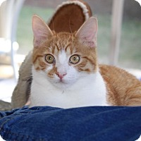 Adopt A Pet :: Benji - Huntsville, AL