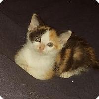 Adopt A Pet :: Marble - Homewood, AL