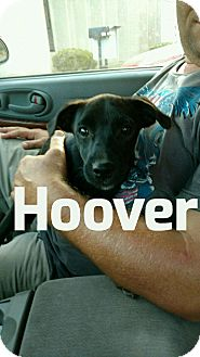Hoover Dog And Cat Manual