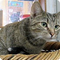 Adopt A Pet :: Nadia - Grinnell, IA