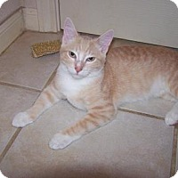 Adopt A Pet :: Peaches 4 - Bulverde, TX