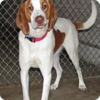 Adopt A Pet :: Buddy - Ruidoso, NM
